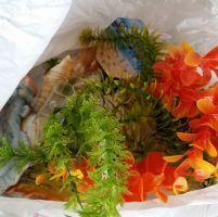 Baratto scambio accessori per acquario bimbi accessori for Oggetti per acquario